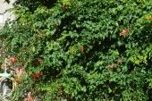 zelenilo u dvoristu